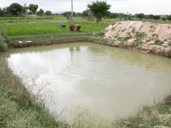 Farmponds dhan foundation for Design of farm pond ppt